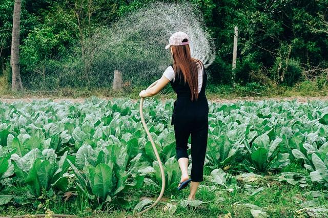 Dziewczyna podlewająca ogródek
