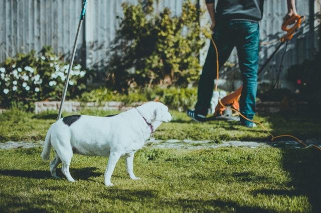 Mężczyzna dbający o trawnik i pies
